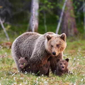 Un soggiorno in Abruzzo ed escursioni di Bear Watching per scovare gli orsi marsicani