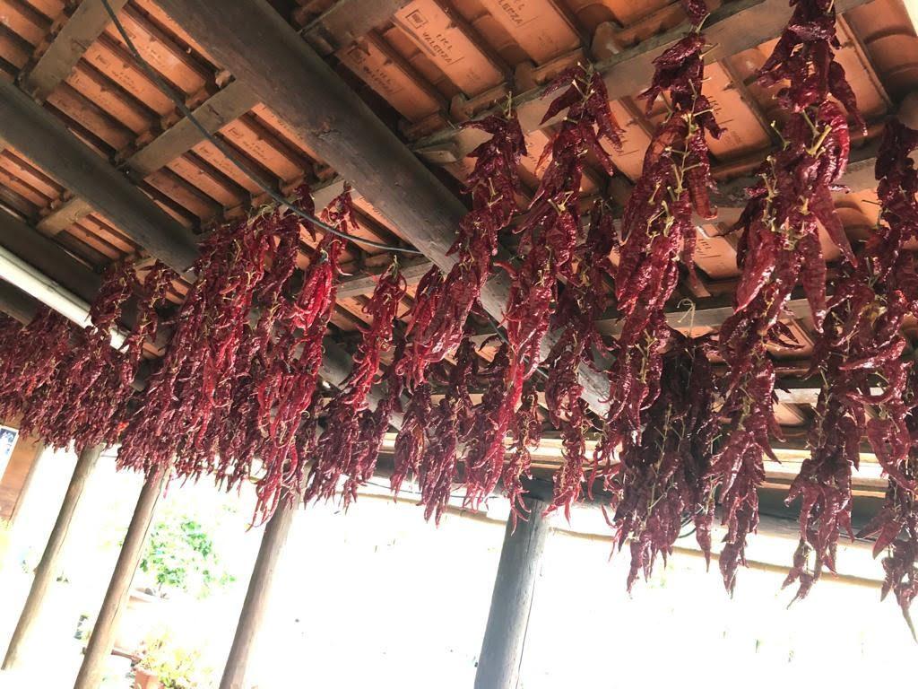 """Vi è una qualità di peperoni detti """"paesanelli"""" che non vengono arrostiti ma stesi ad essiccare al sole."""